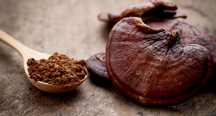 Siberian Chaga: Reishi Mushrooms Benefits